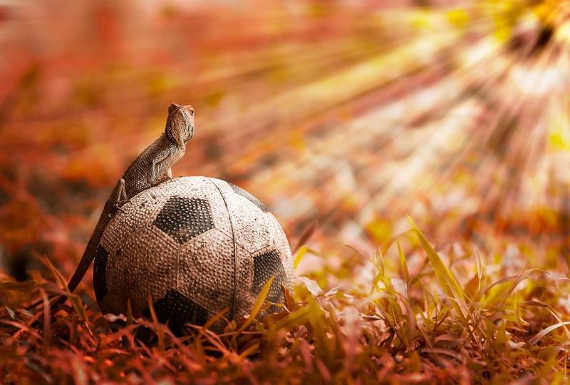 grass,soccer grass soccer reptiles 2048x1384 wallpaper – grass,soccer grass soccer reptiles 2048x1384 wallpaper – Football Wallpaper – Desktop Wallpaper