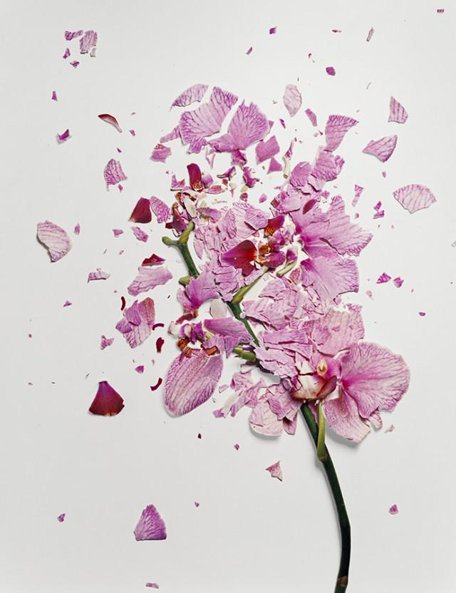 Flowers Soaked in Liquid Nitrogen Shatter on Impact | Colossal