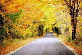fall season - Google Search