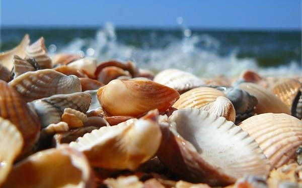 nature,beach nature beach seas seashells depth of field 1920x1200 wallpaper – Beaches Wallpapers – Free Desktop Wallpapers