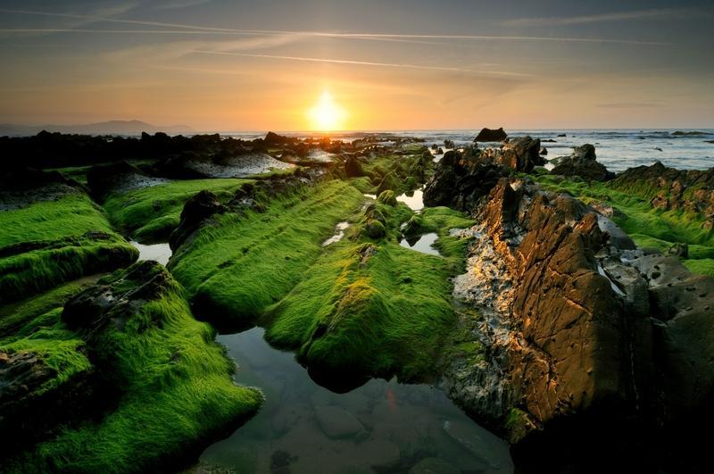 Sun,moss sun moss 2560x1700 wallpaper – Sun,moss sun moss 2560x1700 wallpaper – Sun Wallpaper – Desktop Wallpaper