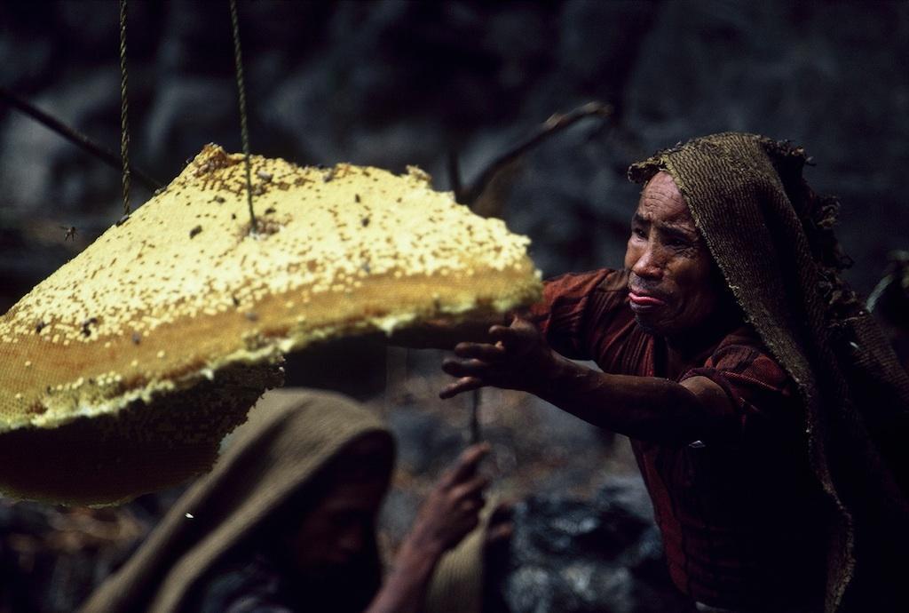Honey Hunters : Eric Valli