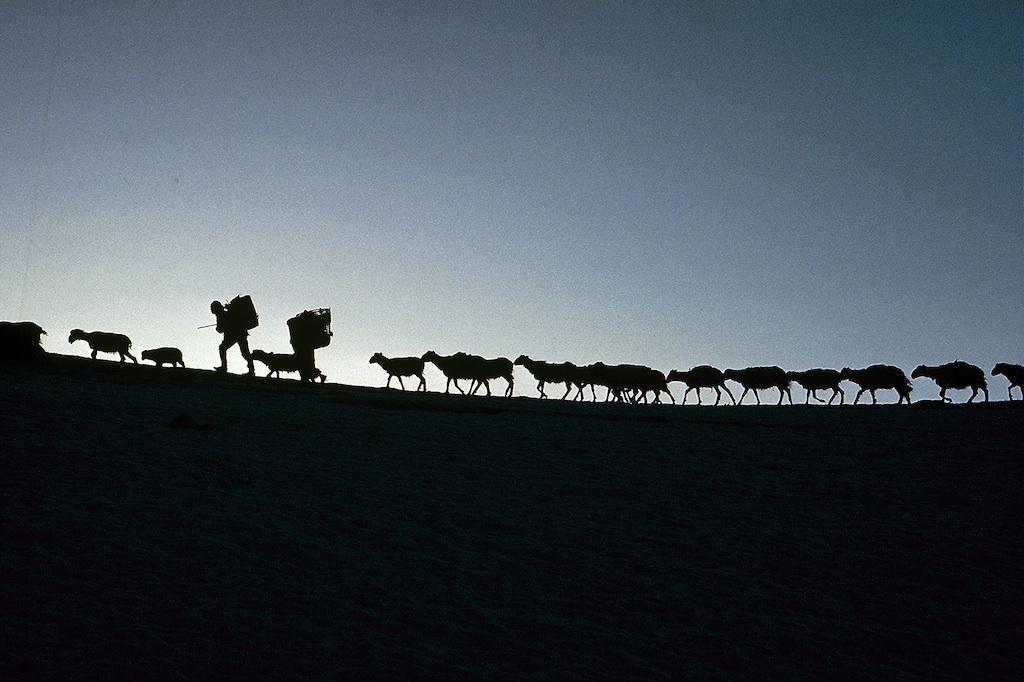 Caravans : Eric Valli