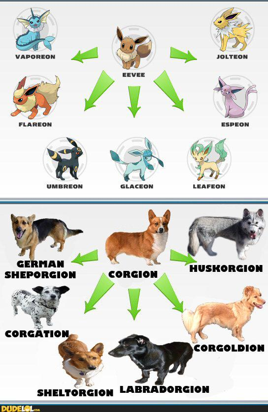 Corgis, the Pokemon Dogs | DudeLOL.com