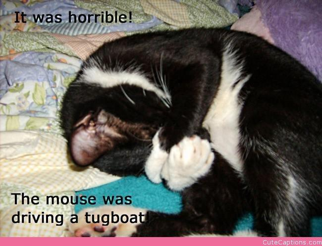 Why Cats Shouldn't Watch Cartoons..   Make Your Own Cute Captions