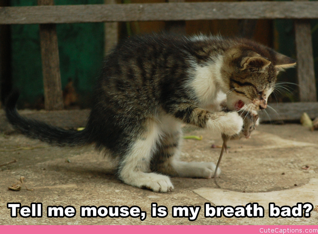 Tell Me Mouse… | Make Your Own Cute Captions