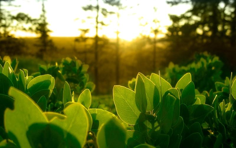 nature,green green nature leaves plants sunlight 1920x1200 wallpaper – nature,green green nature leaves plants sunlight 1920x1200 wallpaper – Sunsets Wallpaper – Desktop Wallpaper