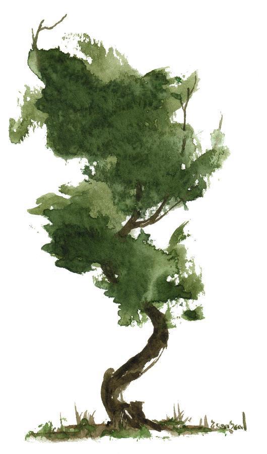 little-zen-tree-153-sean-seal.jpg (530×900)