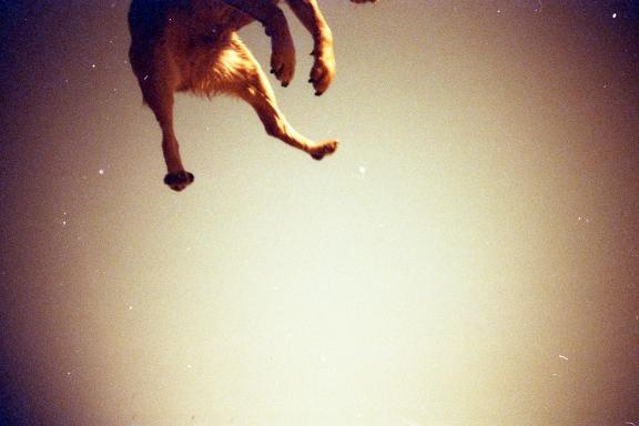 "Une photo de ""earlybird"" - Lomography"