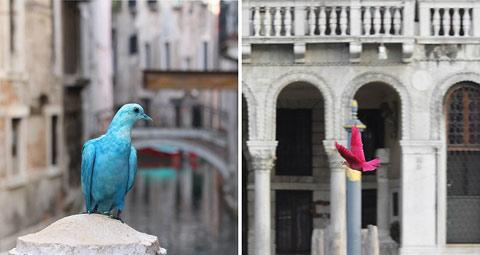 Spray painted pigeons for the 2012 Venice Biennal — Lost At E Minor: For creative people