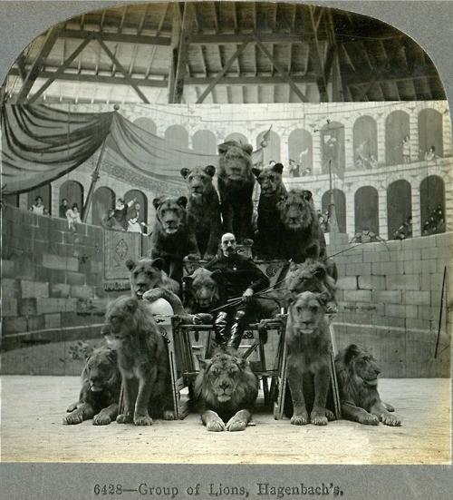 Circus Lions, 1905 | Retronaut