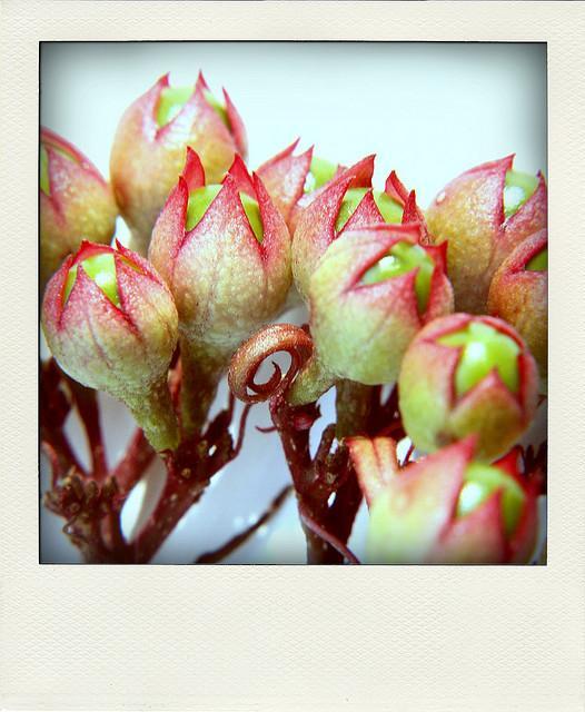 ?????? ??????? | Flickr - Photo Sharing!