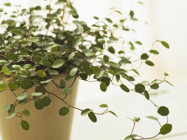 interior-decorating-plants---herb-pots-wallpaper-92421.jpg (JPEG Image, 640 × 480 pixels)