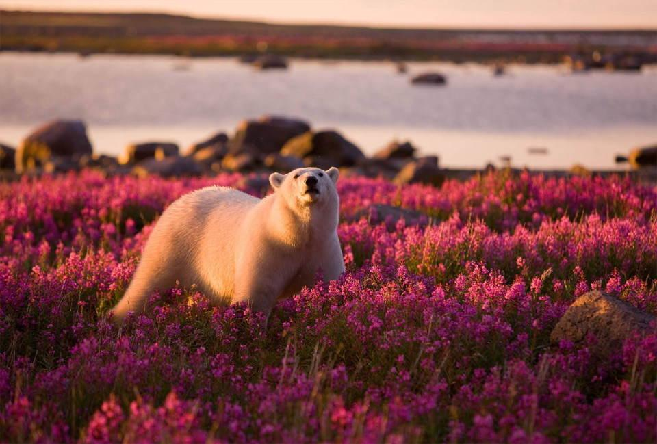 25 Most Beautiful Animals Photography on StumbleUpon   Beautiful Animals