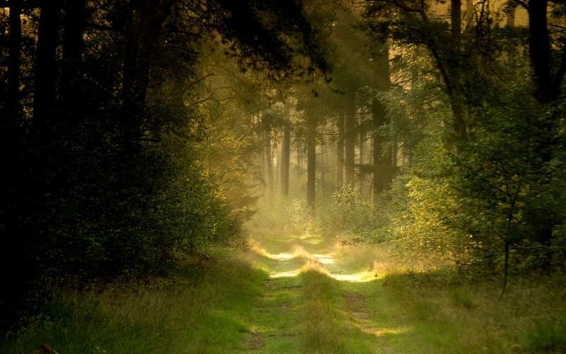 nature,landscapes landscapes nature forest path 2560x1600 wallpaper – nature,landscapes landscapes nature forest path 2560x1600 wallpaper – Forests Wallpaper – Desktop Wallpaper