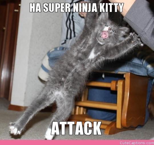 Ha Super Ninja Kitty, Attack | Make Your Own Cute Captions