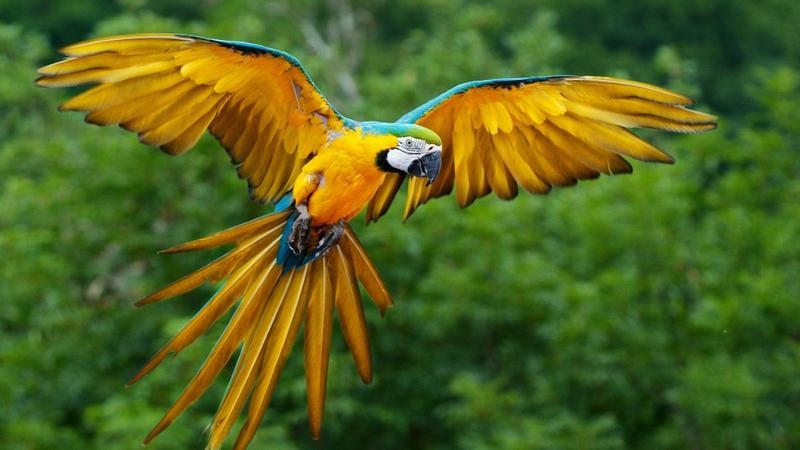 birds,parrots birds parrots 1920x1080 wallpaper – birds,parrots birds parrots 1920x1080 wallpaper – Birds Wallpaper – Desktop Wallpaper