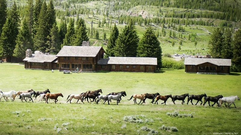 nature,green green nature trees animals grass houses horses running 1920x1080 wallpaper – nature,green green nature trees animals grass houses horses running 1920x1080 wallpaper – Horses Wallpaper – Desktop Wallpaper