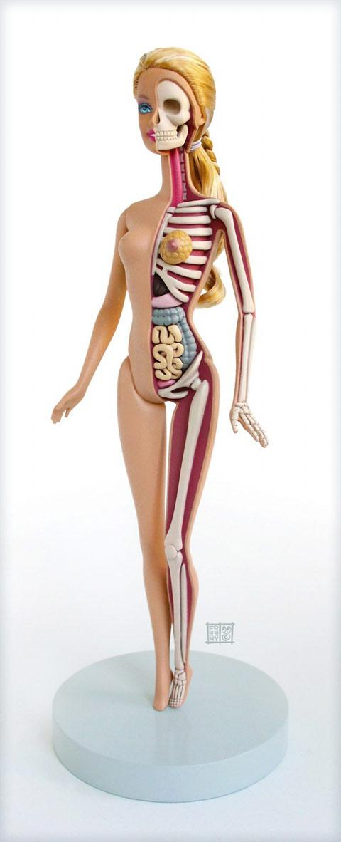 Anatomical Barbie doll — Lost At E Minor: For creative people