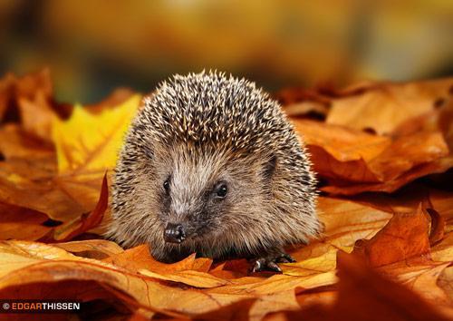 Wildlife Photography Inspiration by Edgar Thissen