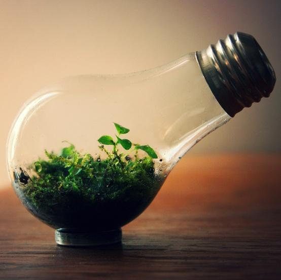 home / Light Bulb Terrarium