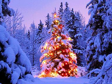 free-christmas-clipart-and-christmas-tree-photos.jpg 384×288 pixels
