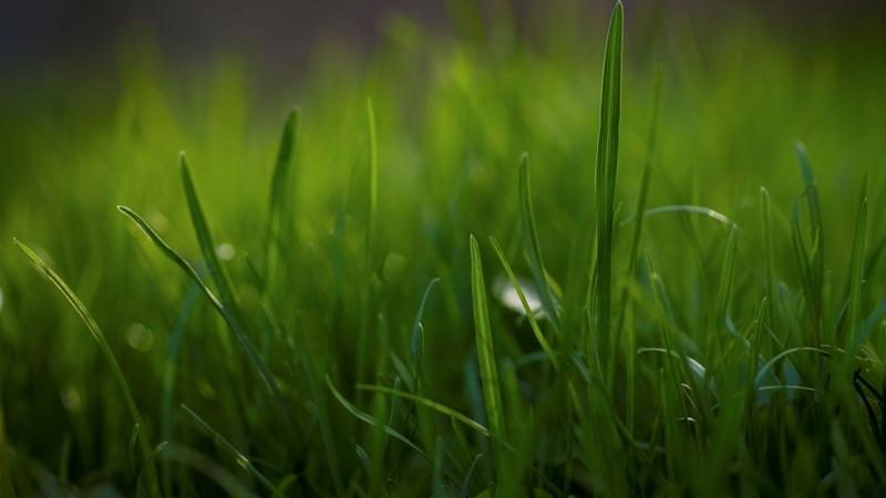nature,grass nature grass plants macro depth of field 1920x1080 wallpaper – nature,grass nature grass plants macro depth of field 1920x1080 wallpaper – Fields Wallpaper – Desktop Wallpaper