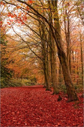 Autumn Walk photo poster by Ally Coxon favourable to order