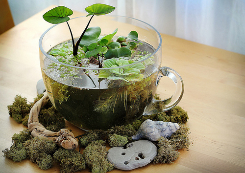 in words and pictures: Indoor Tabletop Water Garden