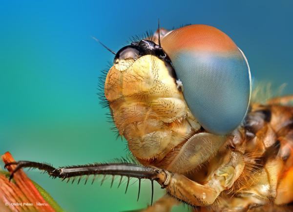 Insect Photography by Ondrej Pakan
