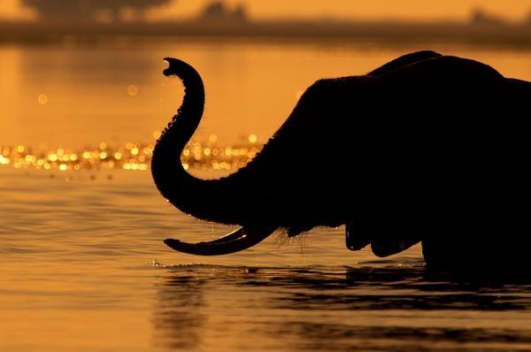swimming,chrome swimming chrome elephants safari mario moreno 2560x1700 wallpaper – Mario Wallpapers – Free Desktop Wallpapers