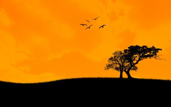 abstract,sunset sunset abstract trees orange 1920x1200 wallpaper – Orange Wallpapers – Free Desktop Wallpapers
