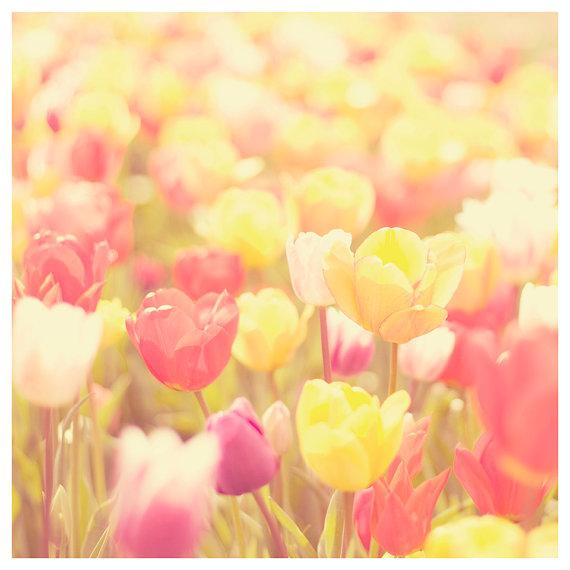 spring tulip photo print whimsical fine art by oohprettyshiny