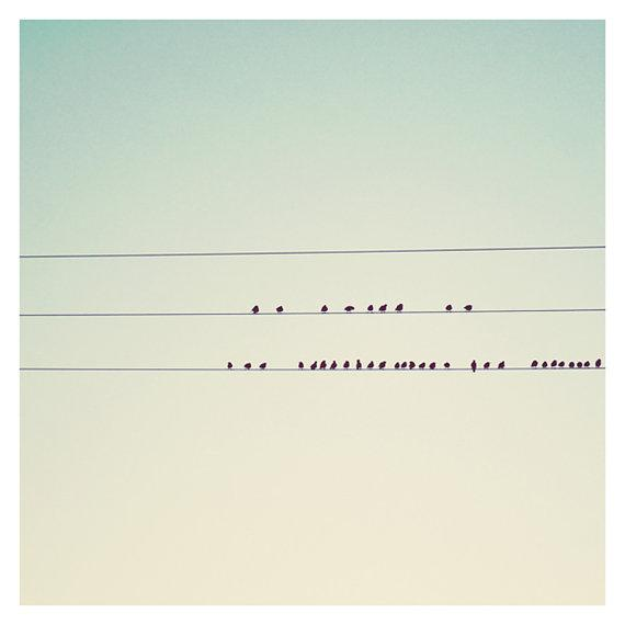 birds on wires photo print whimsical fine art by oohprettyshiny