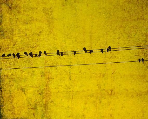 Mustard yellow black birds feathers bird on wire photo by bomobob