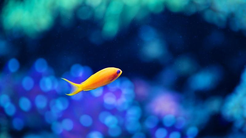blue,ocean blue ocean fish bokeh aquarium underwater 2560x1440 wallpaper – blue,ocean blue ocean fish bokeh aquarium underwater 2560x1440 wallpaper – Oceans Wallpaper – Desktop Wallpaper