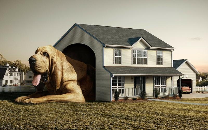 dogs,houses houses dogs creative 1920x1200 wallpaper – dogs,houses houses dogs creative 1920x1200 wallpaper – Dogs Wallpaper – Desktop Wallpaper