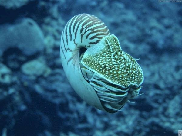 ocean,seas ocean seas nautilus underwater 1024x768 wallpaper – Fish Wallpapers – Free Desktop Wallpapers