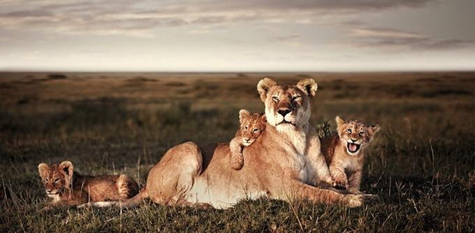 Wildlife Photography by Klaus Tiedge