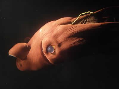 10 Horrible Deep Sea Creatures - Oddee.com (sea monsters, sea animals...)