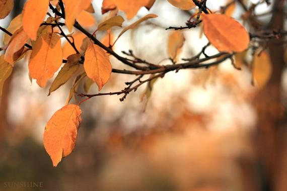 50 off sale Autumn leaf photo November by sunshineartdesign