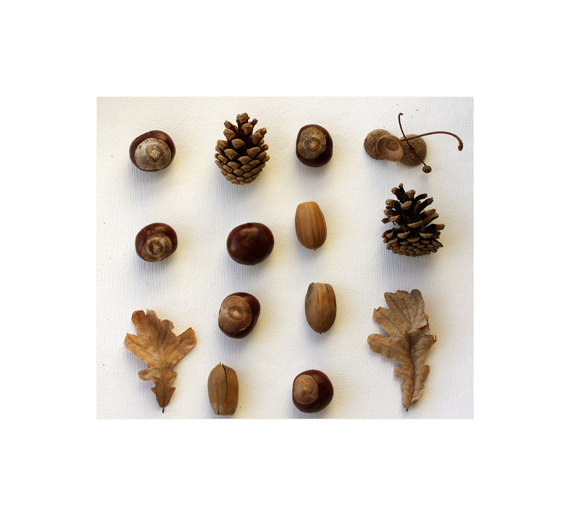 50 off sale Nature collection Acorn leaves by sunshineartdesign