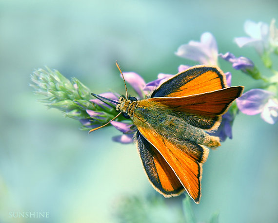 50 off sale Butterfly photos Wings of by sunshineartdesign