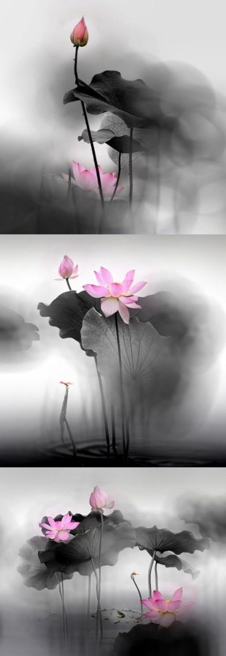 Photos J'aime la peinture / Chinois