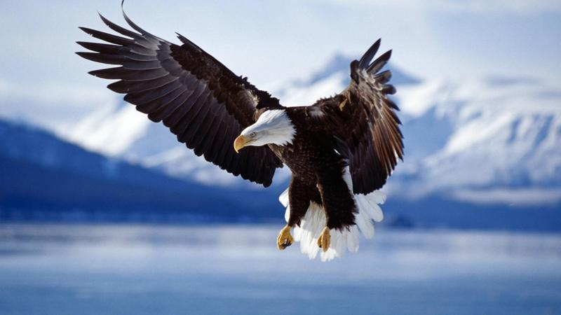 birds,eagles birds eagles 1920x1080 wallpaper – birds,eagles birds eagles 1920x1080 wallpaper – Birds Wallpaper – Desktop Wallpaper