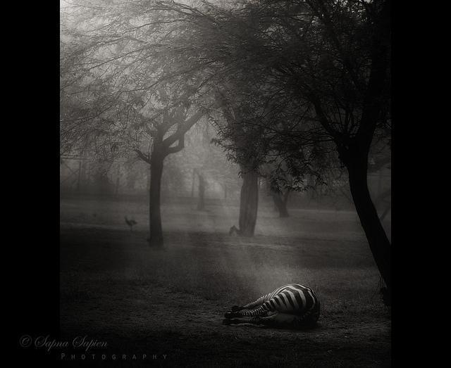 Black and White Photography by Sapna Sapien
