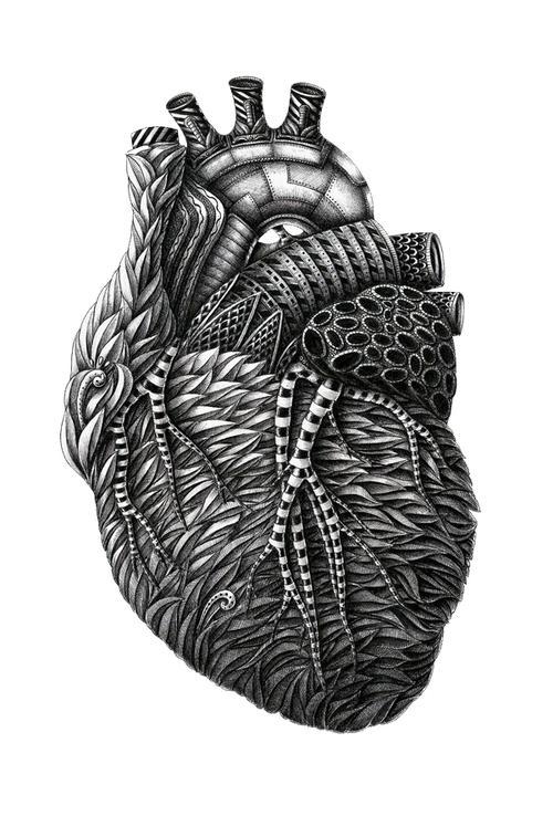 Alex Konahin - Anatomy - Creativitea
