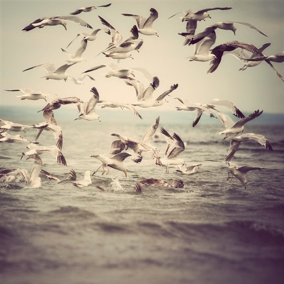 Bird photograph Seagulls in flight over by EyePoetryPhotography