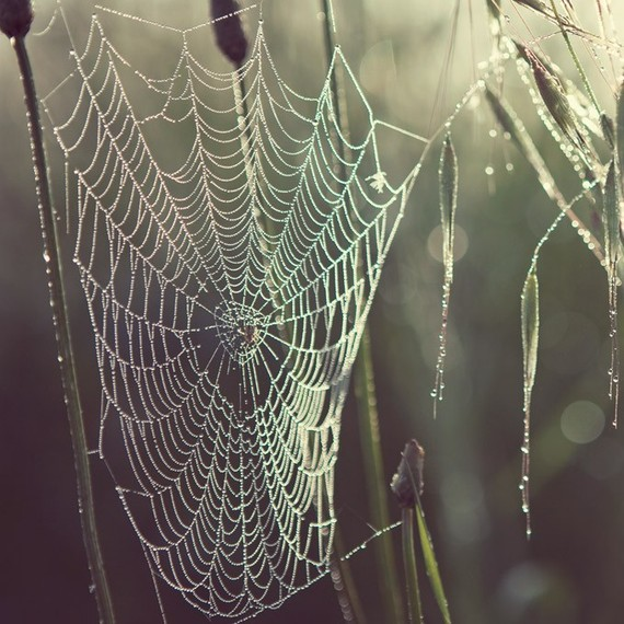 Halloween photograph Spider Web Pearly by EyePoetryPhotography