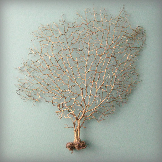 Golden Sea Fan by seaandasters on Etsy